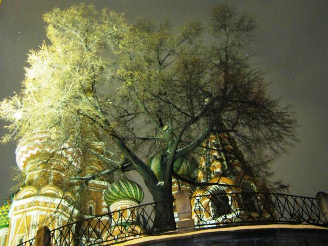 14.11.2016. Путь на Немцов мост. Храм Василия Блаженного и дерево