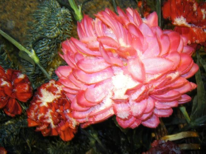26.12.2016. Дежурство на Немцовском мемориале. Цветы под снегом